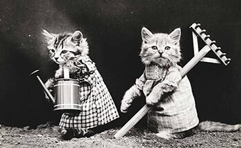 Cats with garden tools background